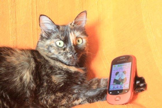 fotos-de-gatos-feelcats-concurso-046