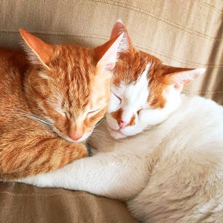 fotos-de-gatos-feelcats-concurso-047