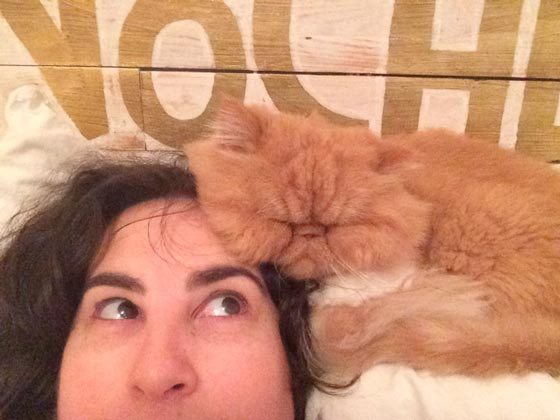 fotos-de-gatos-feelcats-concurso-048
