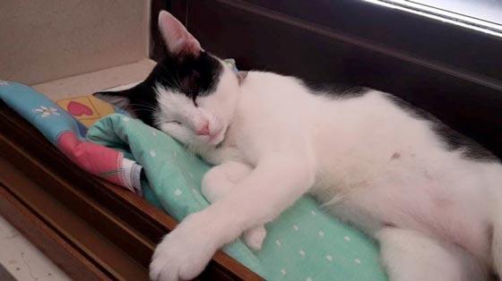 fotos-de-gatos-feelcats-concurso-049