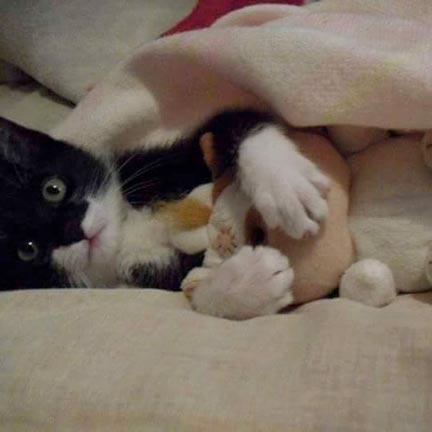 fotos-de-gatos-feelcats-concurso-051