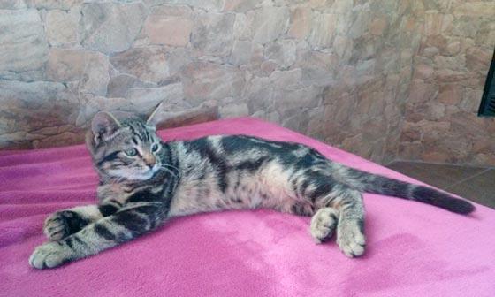 fotos-de-gatos-feelcats-concurso-053
