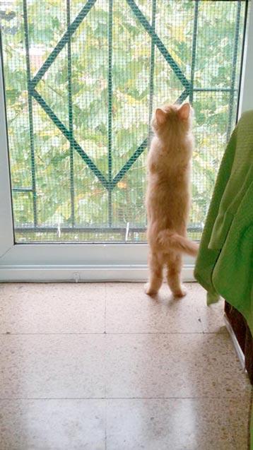 fotos-de-gatos-feelcats-concurso-054