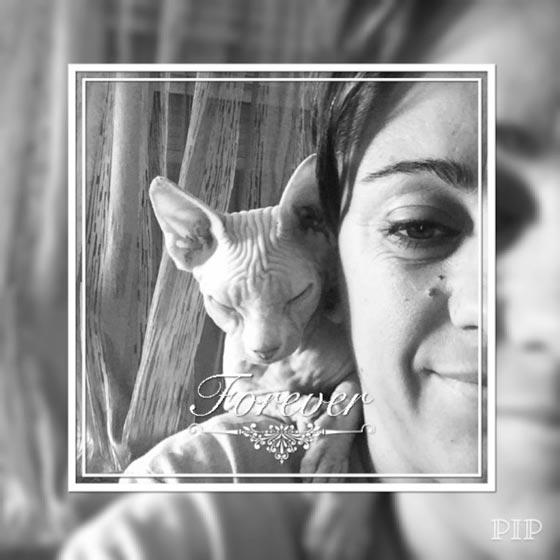 fotos-de-gatos-feelcats-concurso-055
