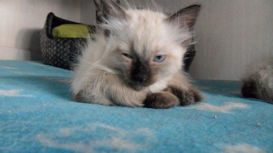 fotos-de-gatos-feelcats-concurso-056