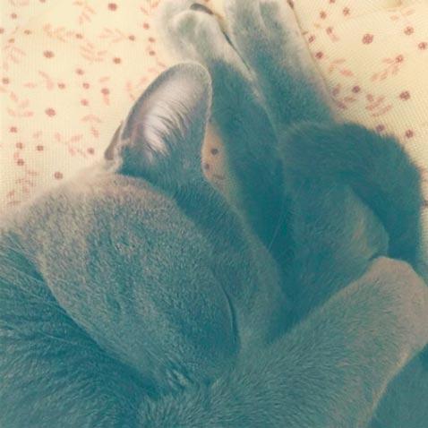fotos-de-gatos-feelcats-concurso-058