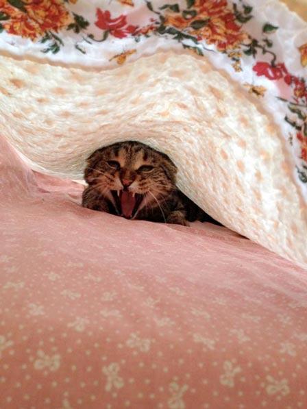 fotos-de-gatos-feelcats-concurso-059