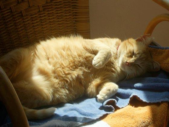 fotos-de-gatos-feelcats-concurso-060
