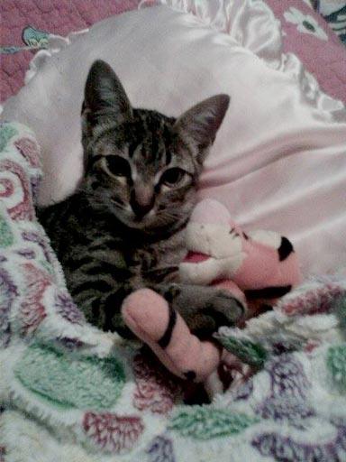 fotos-de-gatos-feelcats-concurso-061