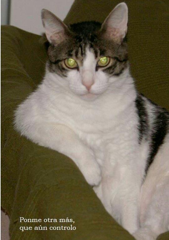 fotos-de-gatos-feelcats-concurso-062