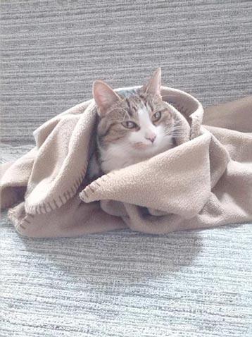 fotos-de-gatos-feelcats-concurso-063