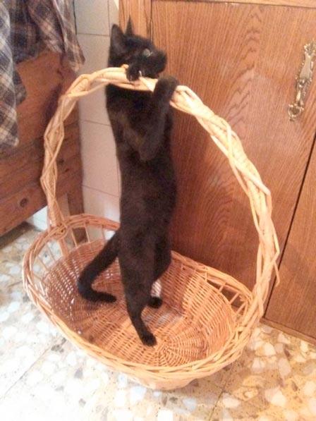 fotos-de-gatos-feelcats-concurso-065