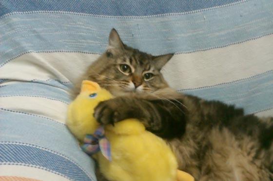 fotos-de-gatos-feelcats-concurso-066