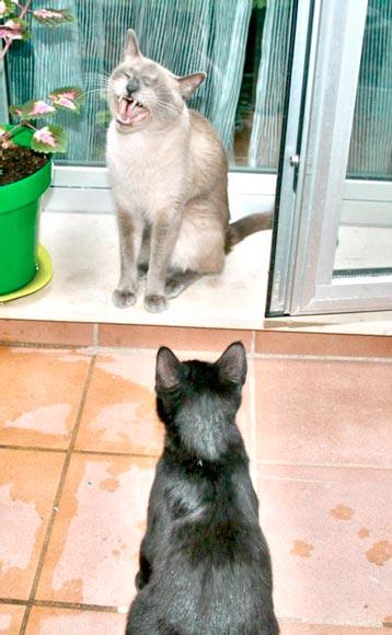 fotos-de-gatos-feelcats-concurso-068
