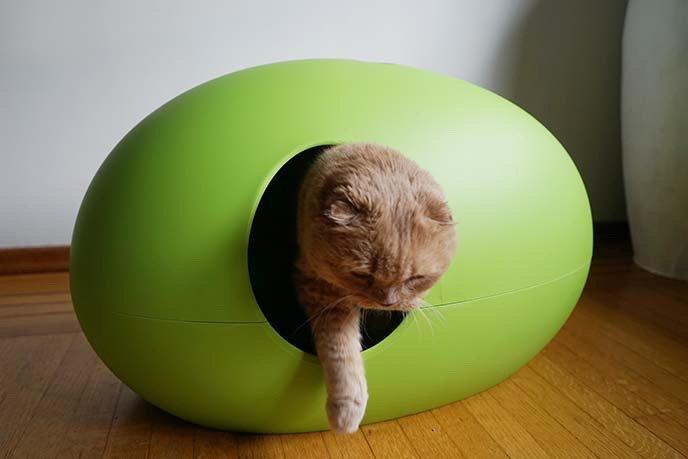 arenero-cubierto-para-gatos-color