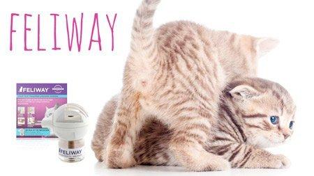 ¿Qué es el feliway? ¿feromonas para gatos?