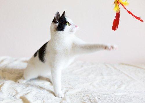 gato le gusta jugar