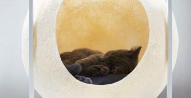 cueva y casa para gatos