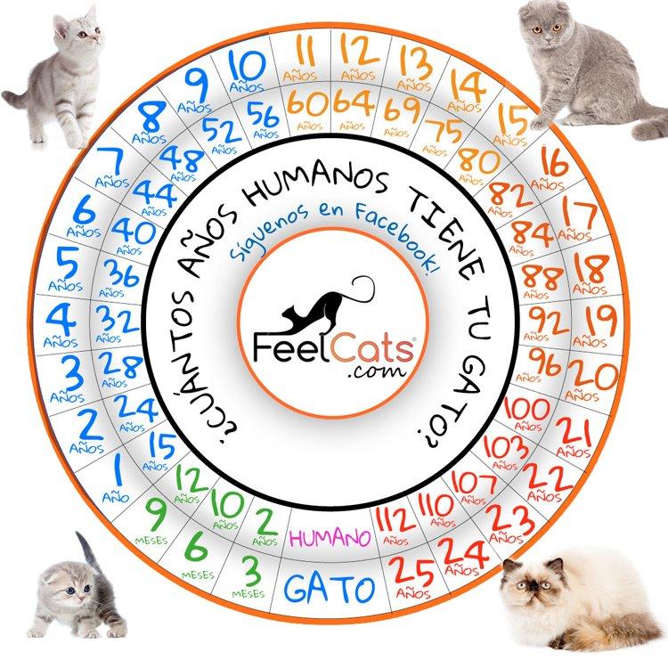 Tabla de años que vive un gato y su relación con los años humanos
