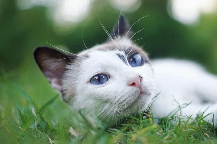 gato y su esperanza de vida