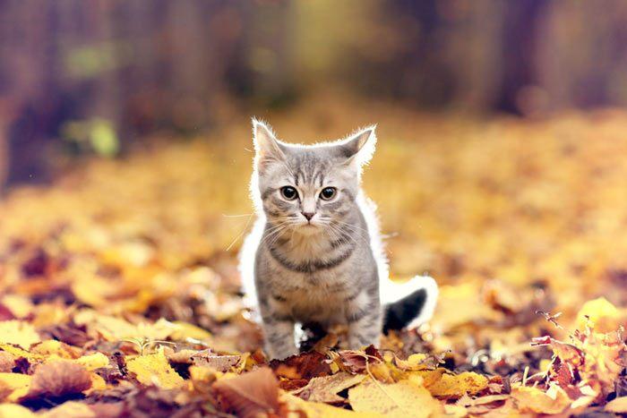 años y edad de los gatos y cuanto viven