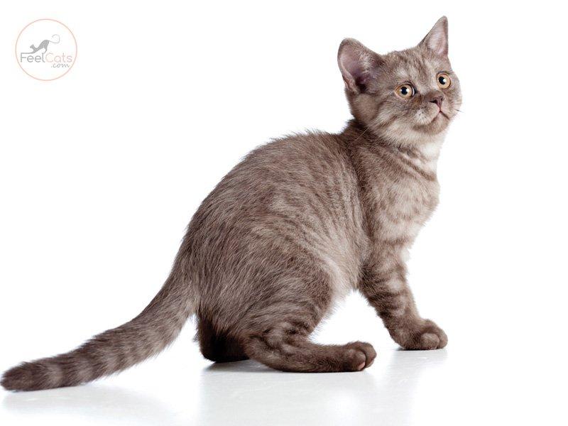 gatos-informacion