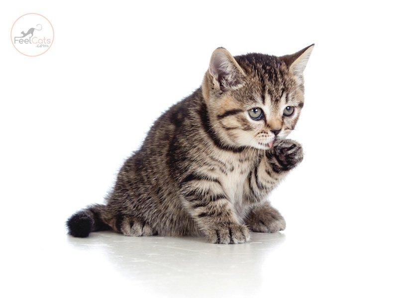 Informacion-sobre-gatos