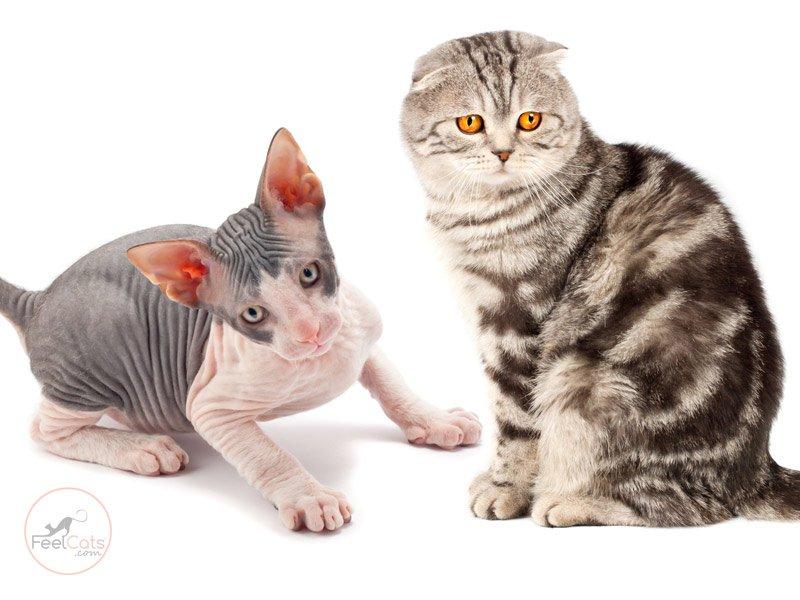 informacion-sobre-los-gatos