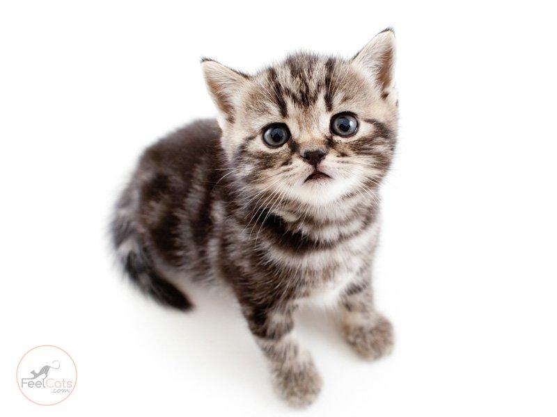 gatos-y-sus-caracteristicas