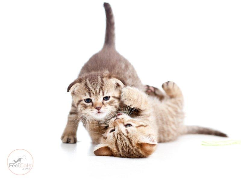 los-gatos