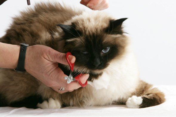 como-cortar-unas-gato