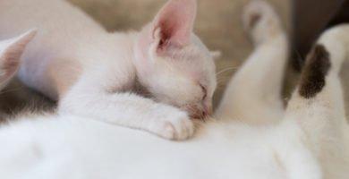 gatito-amasando