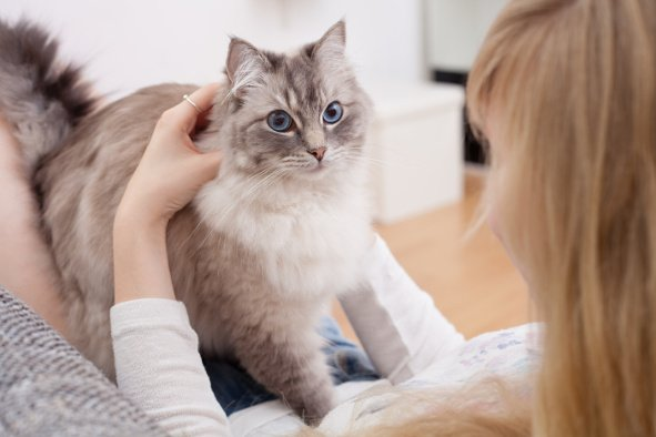 gato-amasando-amo