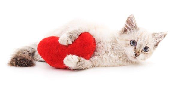 gato-amasando
