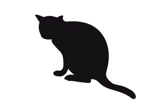 gato-mueve-cola-y-cuerpo