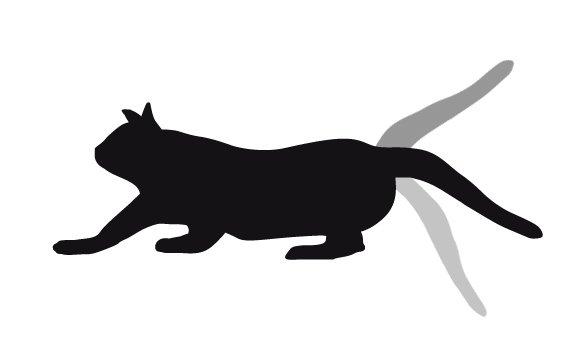 gato-mueve-la-cola-muy-rapido