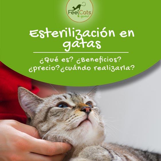 esterilizar-gata-gato