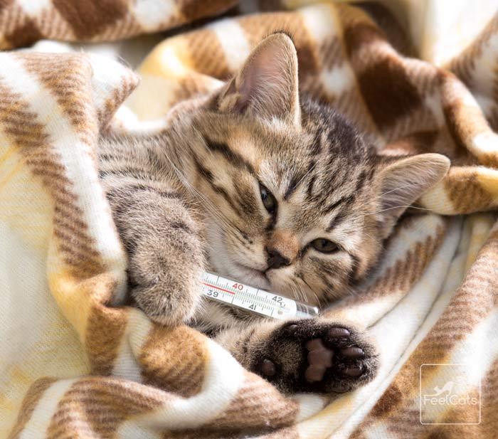 estornuda-gato-resfriado