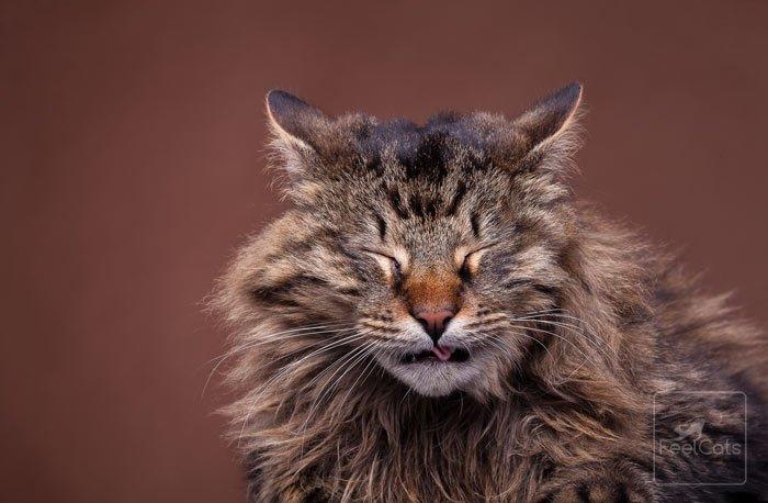 4 razones por las que un gato estornuda