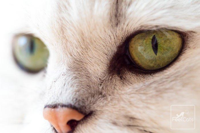 nariz-de-gato