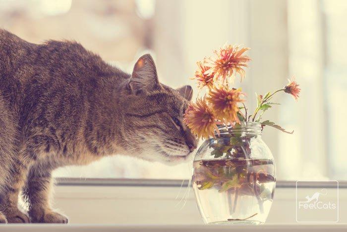 alergias-gatos-estornudan