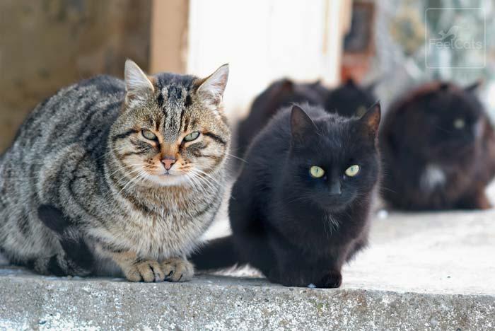 aislamiento-gatos-con-calicivirus