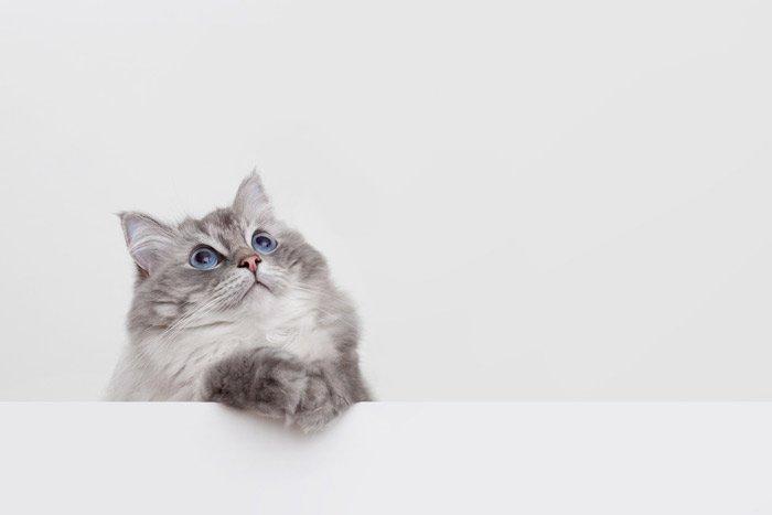 Día Internacional del Gato ¿Cuándo y dónde se celebra?