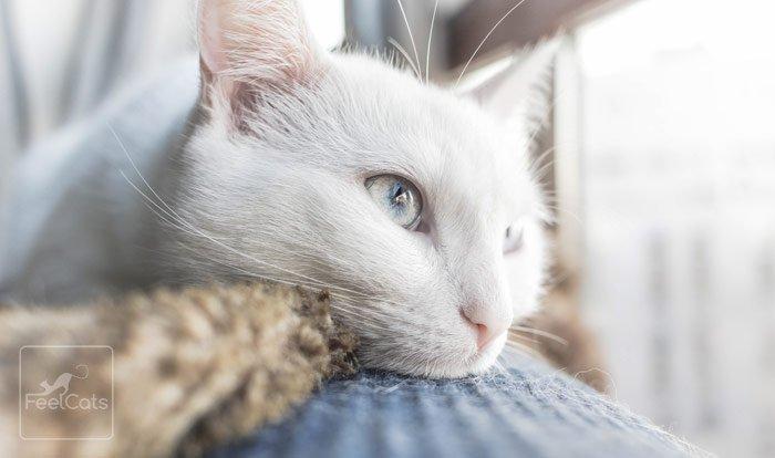 esperanza-vida-insuficiencia-renal-gatos