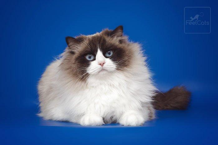 gato-muneca-de-trapo