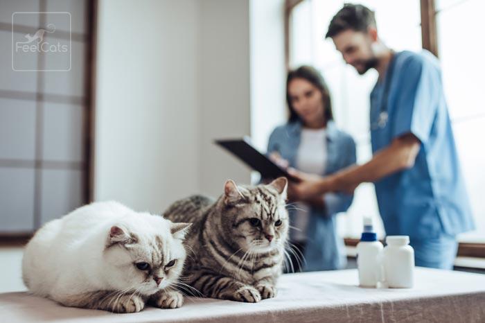 gatos-causas-insuficiencia-renal