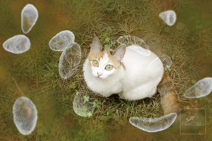 parasito-toxoplasmosis-gatos