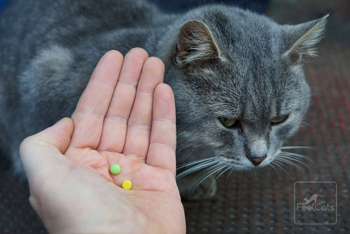 toxoplasmosis y gatos en casa