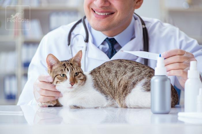 tratamiento-insuficiencia-renal-gatos