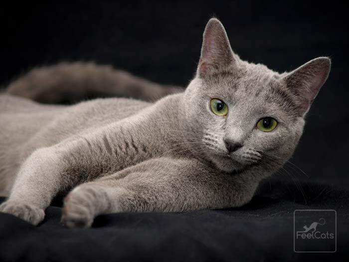 azul-ruzo-gato